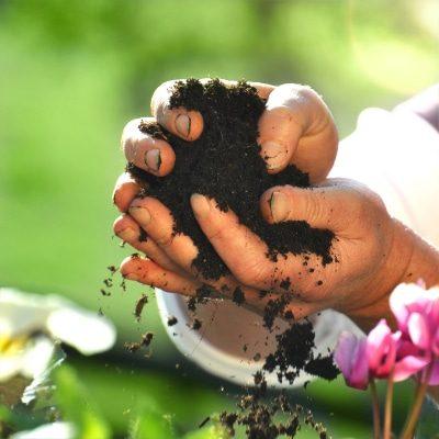 die-pflanze-dienstleistungen-eigeneerde