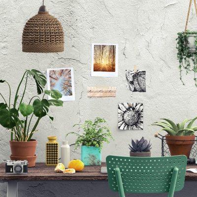 die-pflanze-dienstleistungen-innenraumbegruenung