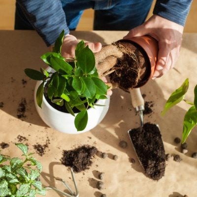 die-pflanze-dienstleistungen-pflanzengesundheit