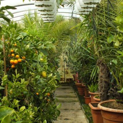 die-pflanze-dienstleistungen-ueberwinterung