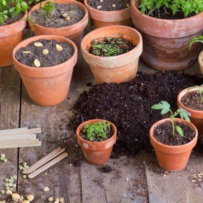 unsere-pflanzenwelt-tontoepfe